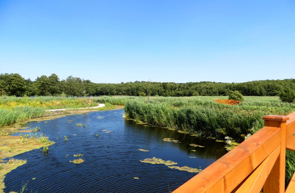 jazierko z mosta